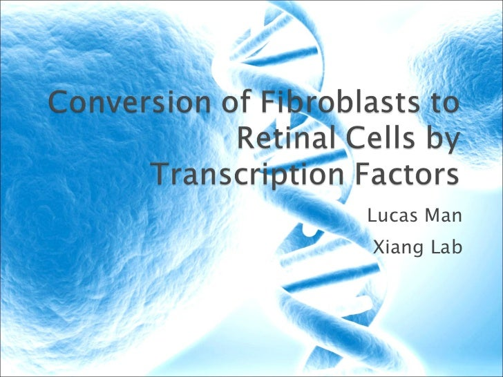 Conversion of fibroblasts to retinal cells by transcription (final)