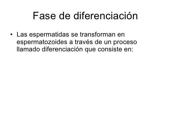 Fase de diferenciación <ul><li>Las espermatidas se transforman en espermatozoides a través de un proceso llamado diferenci...