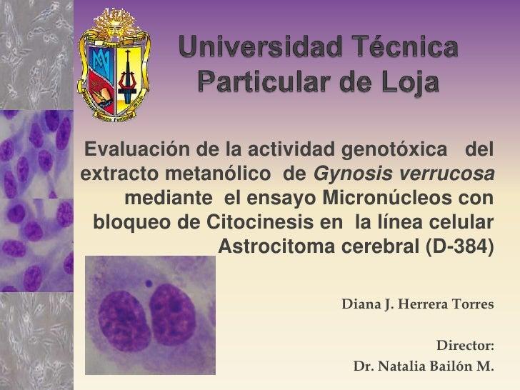 Universidad Técnica Particular de Loja<br />Evaluación de la actividad genotóxica   del extracto metanólico  de Gynosis ve...