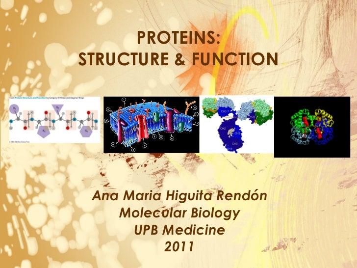 PROTEINS: STRUCTURE & FUNCTION Ana Maria Higuita Rendón Molecular Biology UPB Medicine 2011