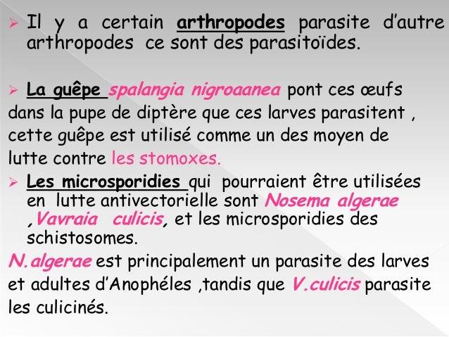 Les symptômes les signes des parasites et le traitement