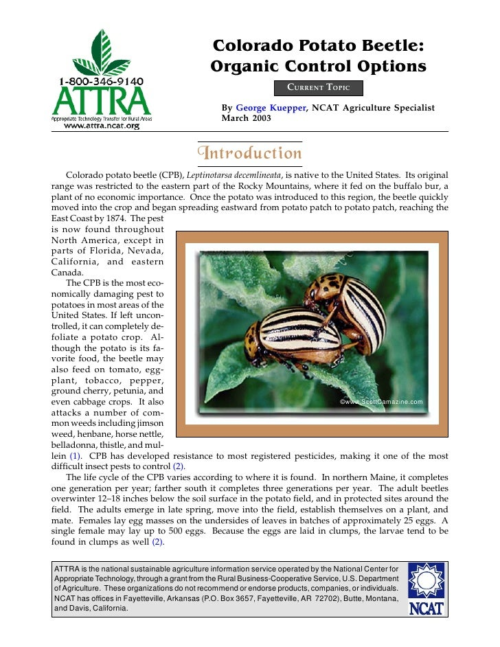 Colorado Potato Beetle:                                             Organic Control Options                               ...