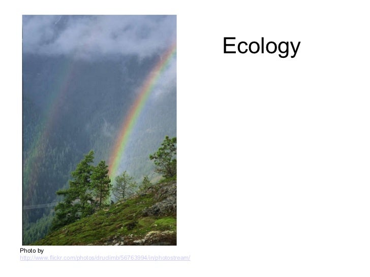 Copy of ecology