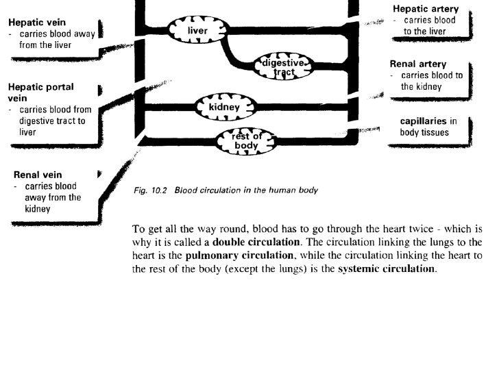 Copy Of Human Circulation