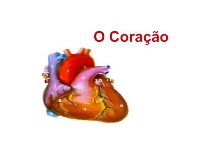 • O coração é um órgão muscular localizado  abaixo do osso anterior do tórax (chamado de  esterno).• Tem aproximadamente o...