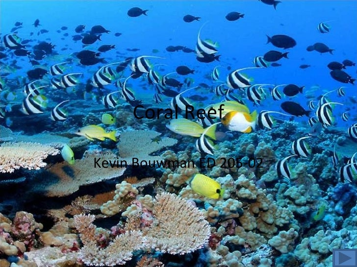 Coral Reef Kevin Bouwman ED 205-02