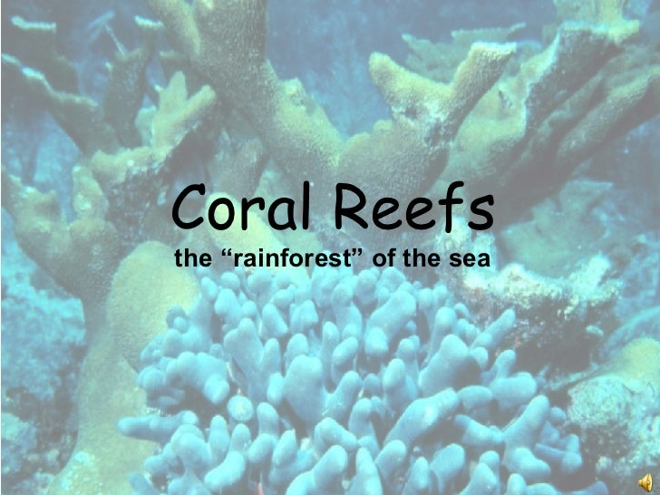 "Coral Reefs the ""rainforest"" of the sea"