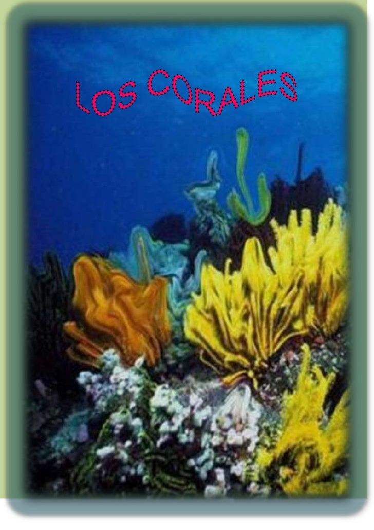 -851535-740410<br /> CORALES <br />Los corales son pequeños animales que construyen grandes paredes calcáreas submarinas c...