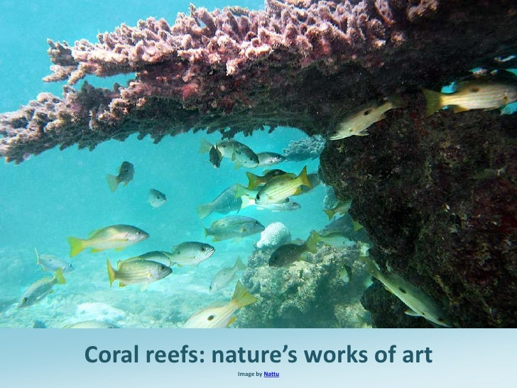 Coral reefs: nature's works of art              Image by Nattu