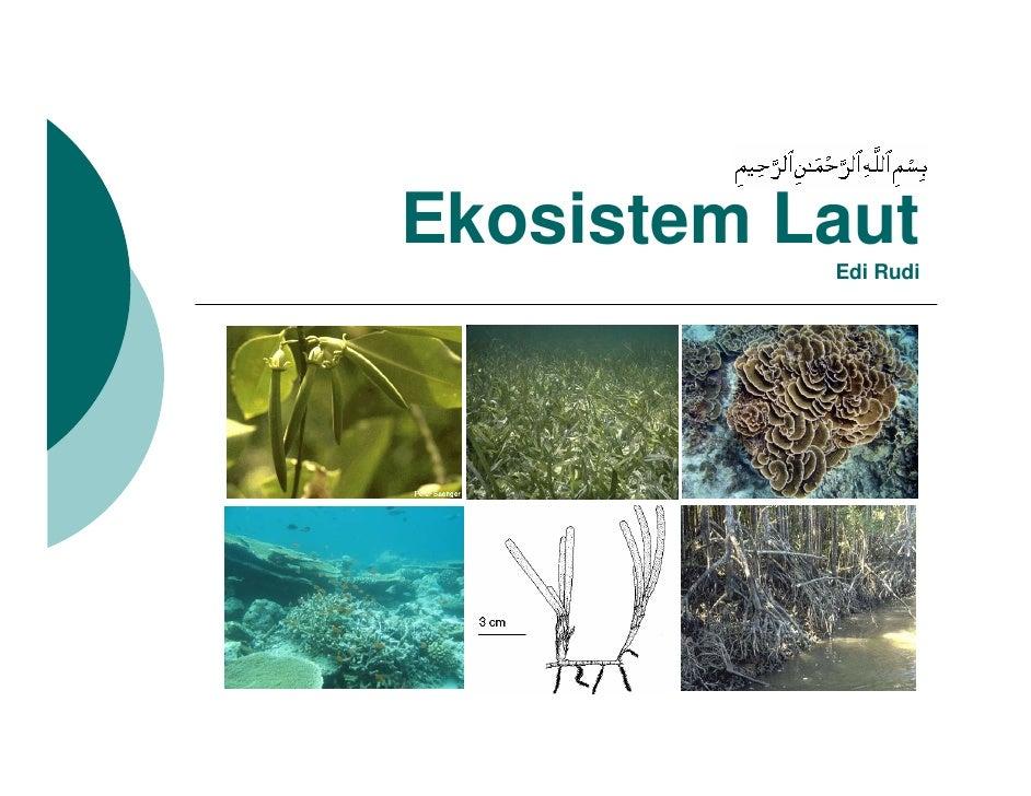 biologi dasar - ekosistem laut