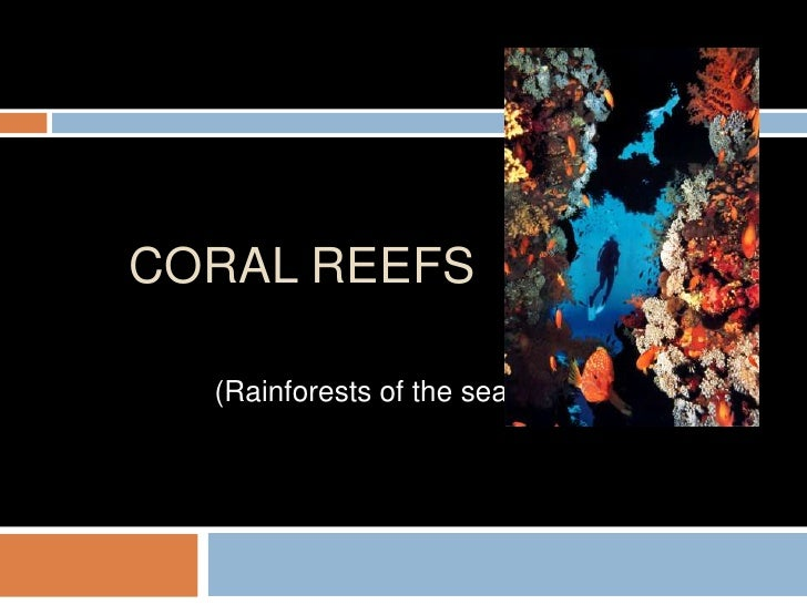 Coral reefs<br />(Rainforests of the sea)<br />