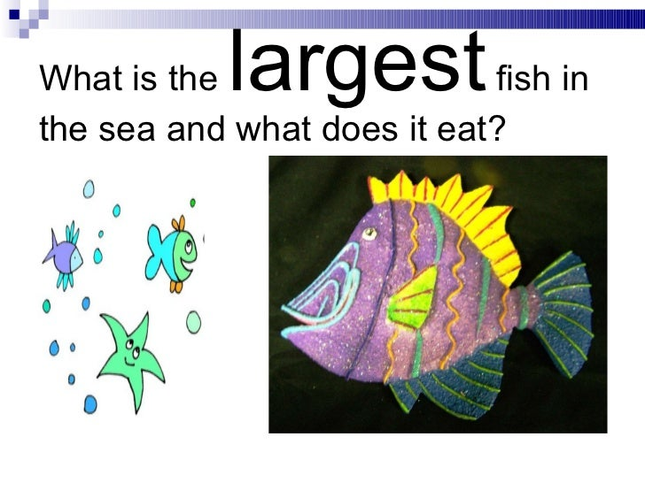 Coral reefs for What do fish eat