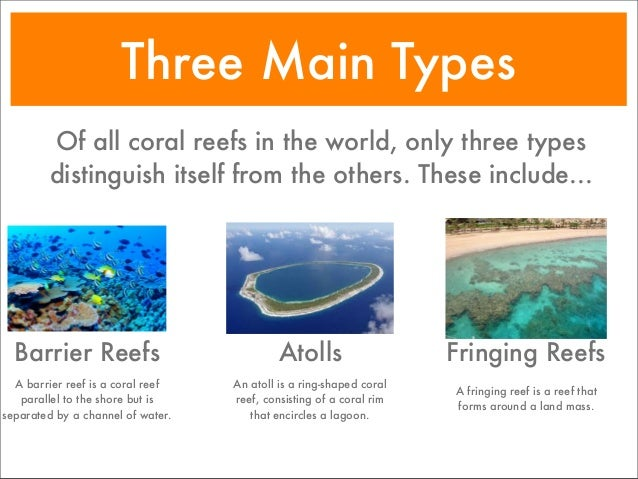 the basic categories and structure of coral reefs It is one of the sub-categories within the section dealing with biodiversity of marine habitats and ecosystems it gives these 3 are the main reef types coral structure not all corals are reef building species there are also hard corals existing as single, solitary polyps some temperate species form small.