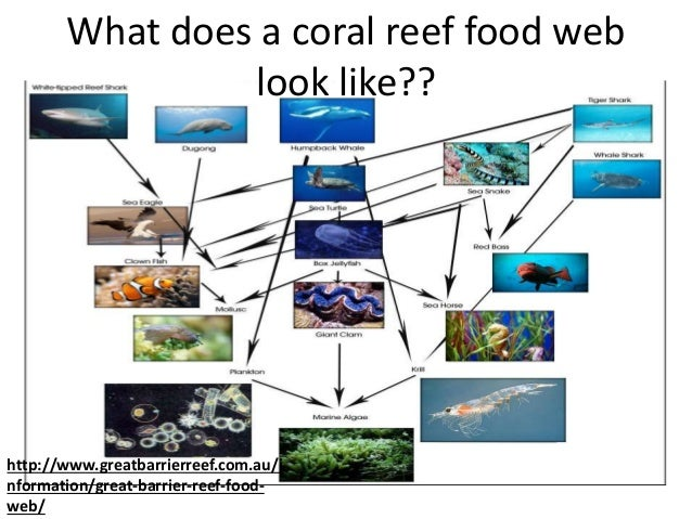 Coral Reef Food Web Chain Pictures to Pin on Pinterest - PinsDaddy