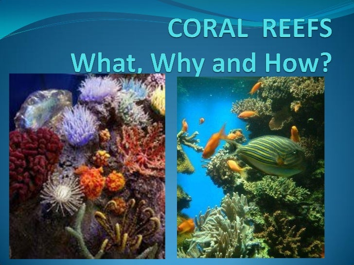 About the Bahamas Coral Reefs