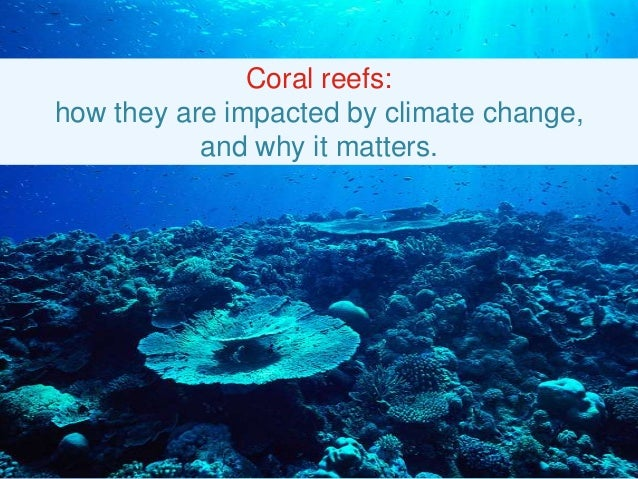 Coral reefs: how they are impacted by climate change, and why it matters.