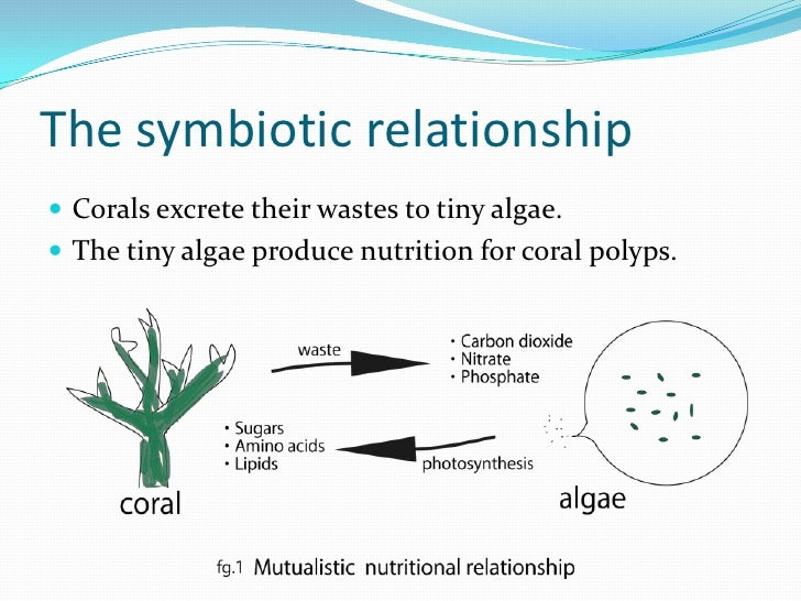 coral and algae symbiotic relationship