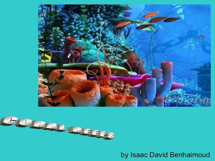 Coral reefs by Isaac Benhaimoud