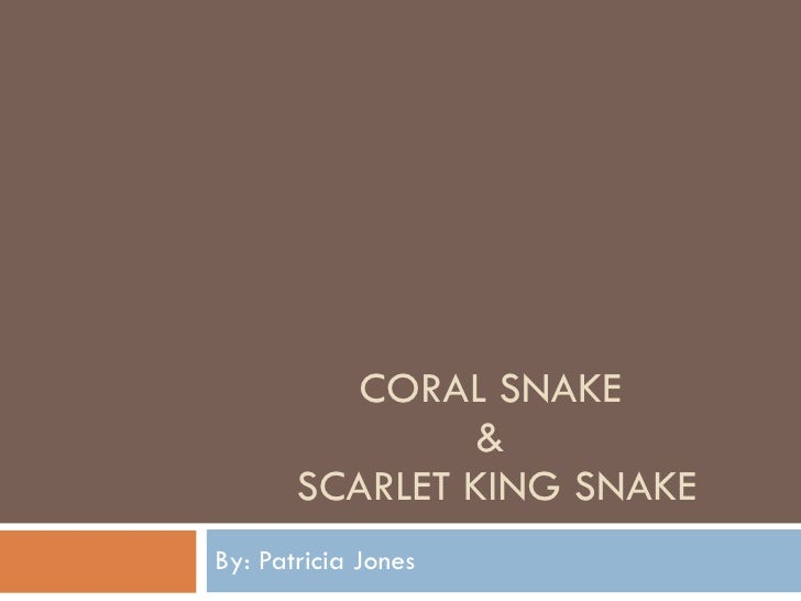 CORAL SNAKE &  SCARLET KING SNAKE By: Patricia Jones