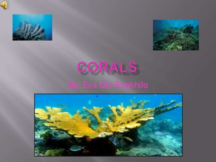 Corals Reefs