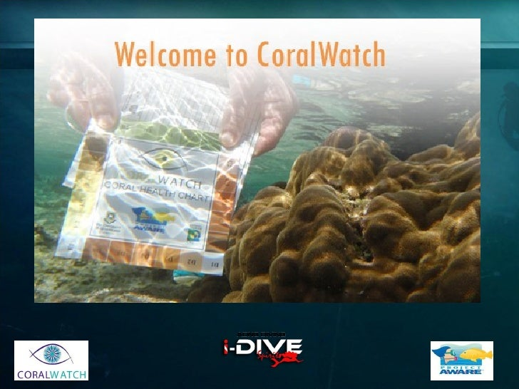 Coralwatch ADNG DIVING