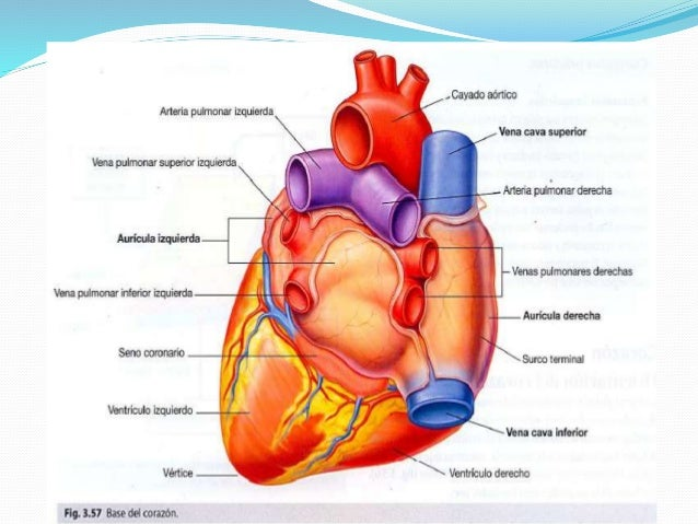 Caras y Bordes del Corazón   Estrategias de Aprendizaje: Sánchez ...