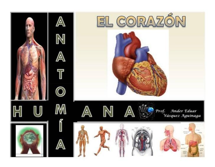 El corazón es:• Un órgano hueco del tamaño del puñoUbicación Topográfica• Está encerrado en la cavidad torácica, en el cen...