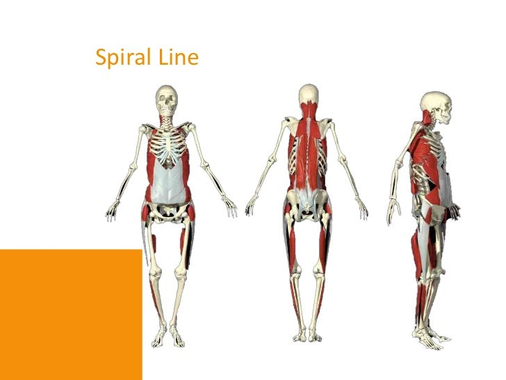 Core hip and slings function review oct 2012