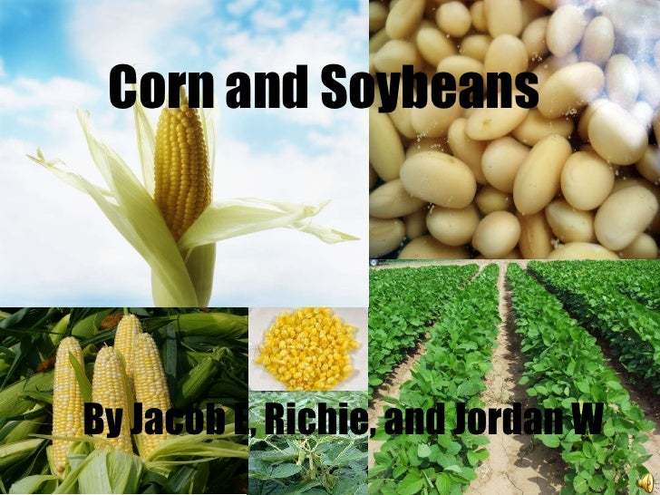 Corn and Soybeans By Jacob E, Richie, and Jordan W