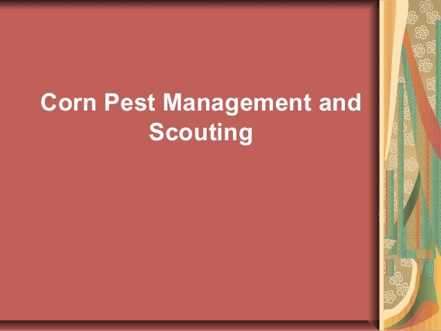 Corn pest management and scouting by RIZWAN MUSTAFA SHAH