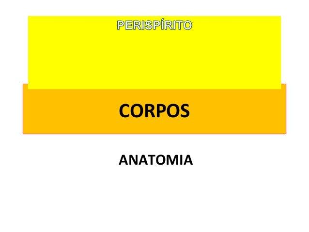 CORPOS ANATOMIA
