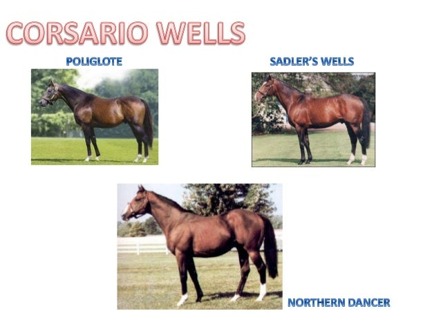 Corsario wells