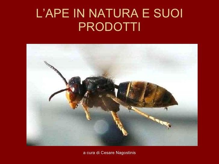 Corso sulle api di Cesare