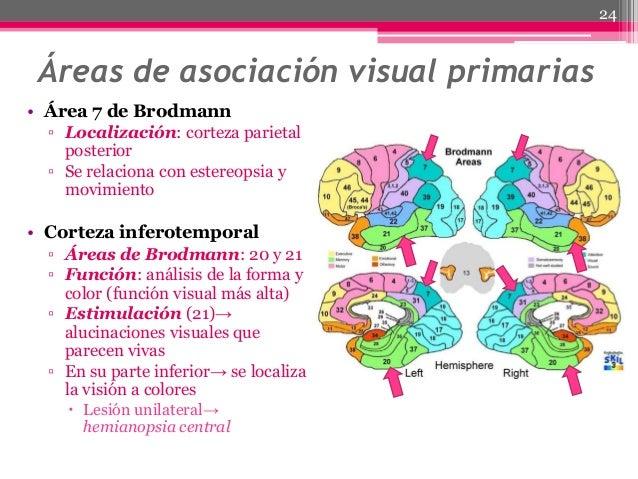 visual form agnosia essay