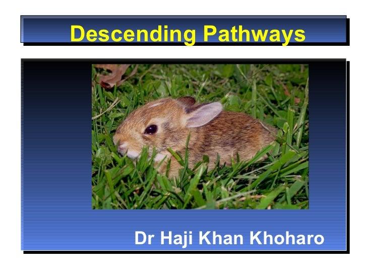 Desc ending Pathways Dr Haji Khan Khoharo