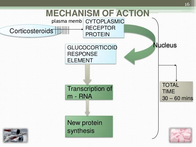 Corticosteroids Mechanism of Action 16 Mechanism of Action Plasma