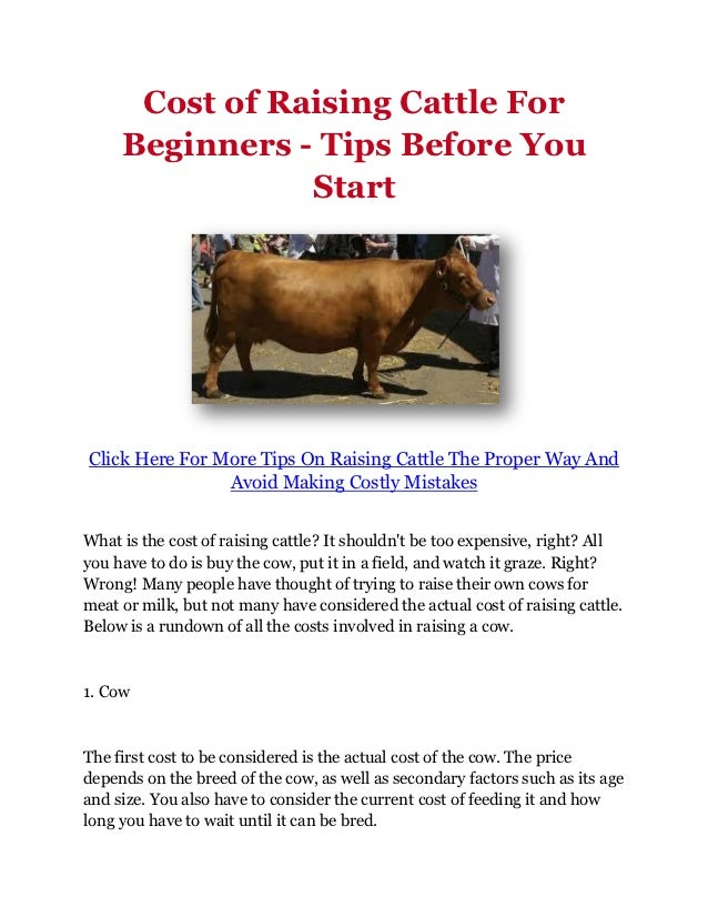 Cost of Raising Cattle For     Beginners - Tips Before You                StartClick Here For More Tips On Raising Cattle ...