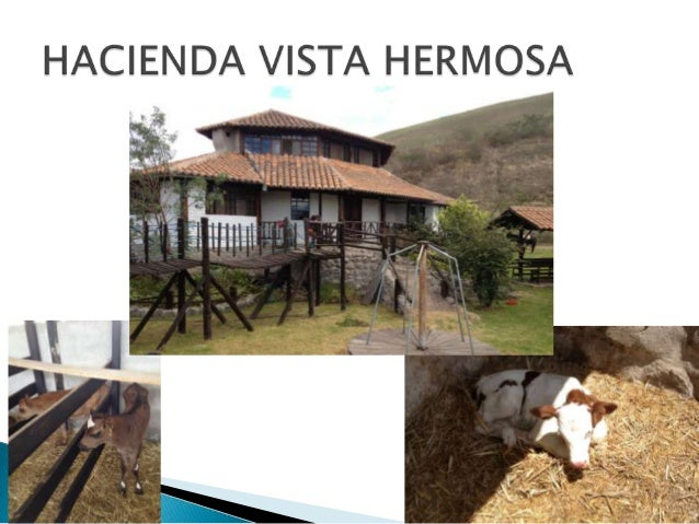 HACIENDA VISTA HERMOSA es una         empresa privada dedicada a laproducción lechera y venta de vaconas y terneras, esta ...