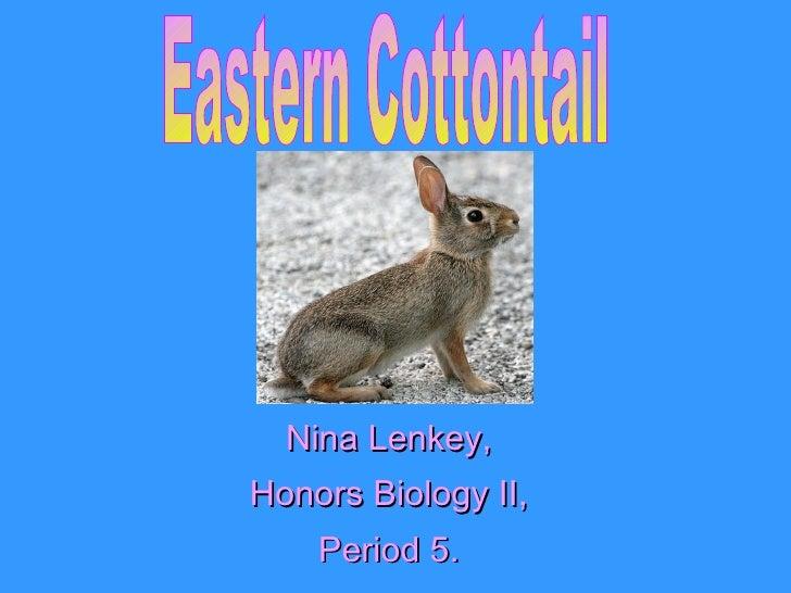 Nina Lenkey, Honors Biology II, Period 5. Eastern Cottontail