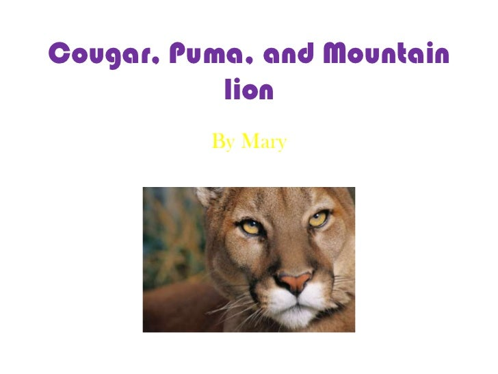 Cougar, Puma, and Mountain lion<br />By Mary<br />