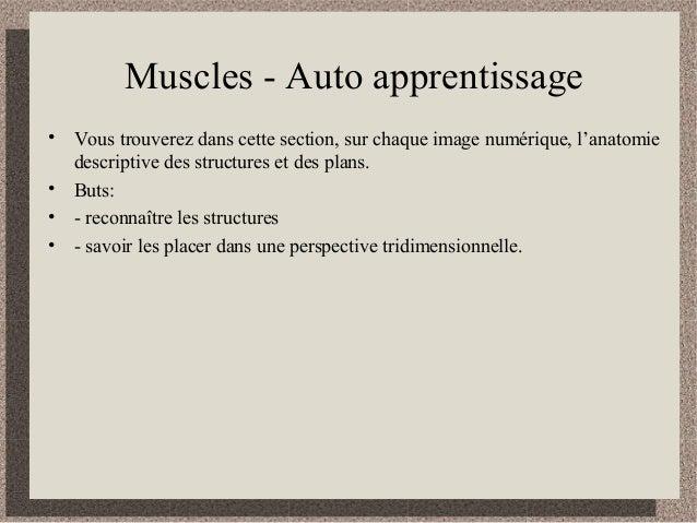 Muscles - Auto apprentissage • Vous trouverez dans cette section, sur chaque image numérique, l'anatomie descriptive des s...