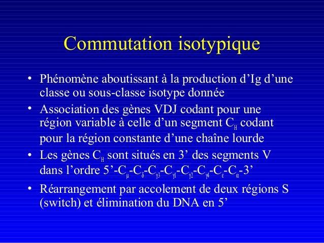 Commutation isotypique• Phénomène aboutissant à la production d'Ig d'uneclasse ou sous-classe isotype donnée• Association ...