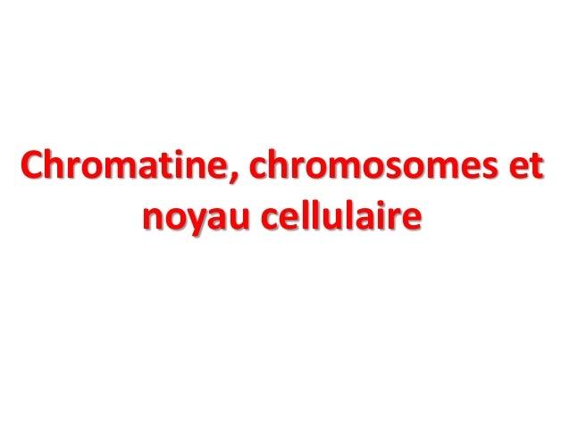 Chromatine, chromosomes et noyau cellulaire