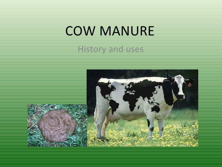 COW MANURE History  and  uses