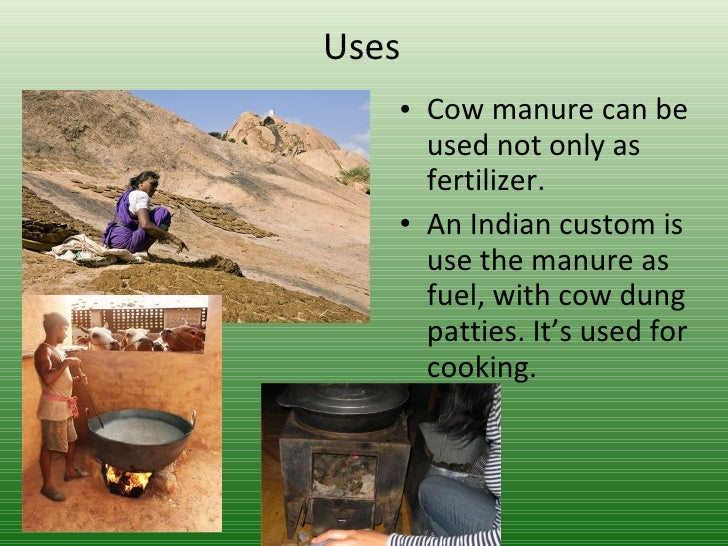 mosquito coil from cow s manure Best answer: you find lots of recipes how to make herbal mosquito repellents, and several publications that manure is an excellent mosquito coil.