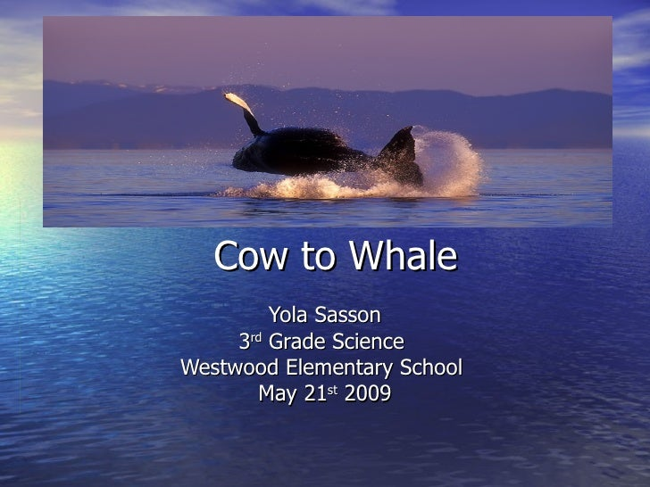 Cow to Whale Yola Sasson 3 rd  Grade Science  Westwood Elementary School  May 21 st  2009