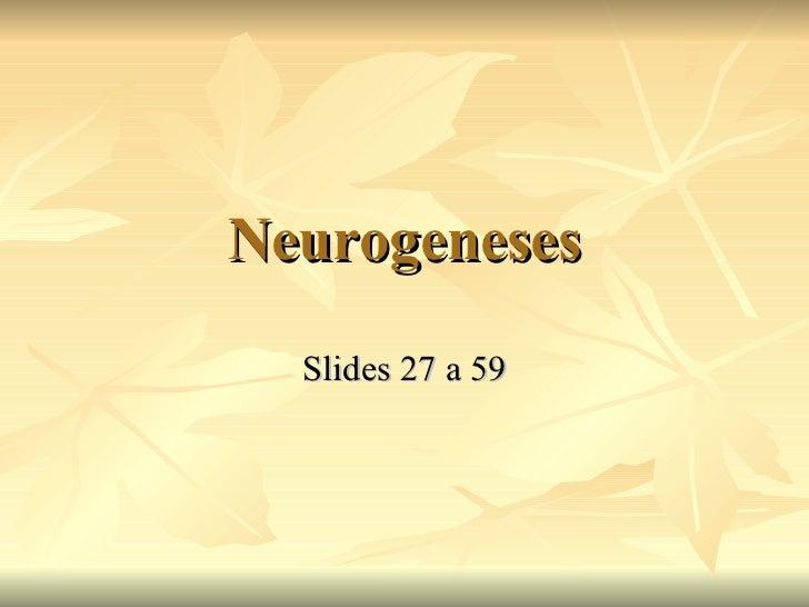Neurogeneses Slides 27 a 59