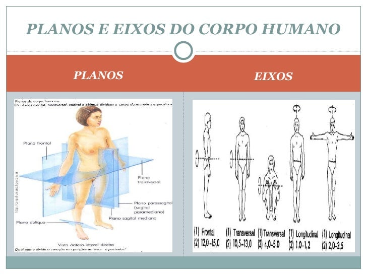 <ul><li>PLANOS </li></ul><ul><li>EIXOS </li></ul>PLANOS E EIXOS DO CORPO HUMANO