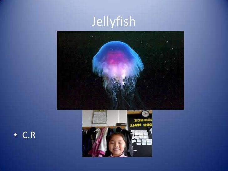Jellyfish<br />C.R<br />