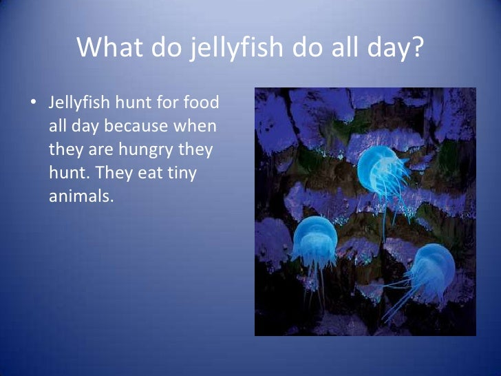 What Do Jellyfish Eat